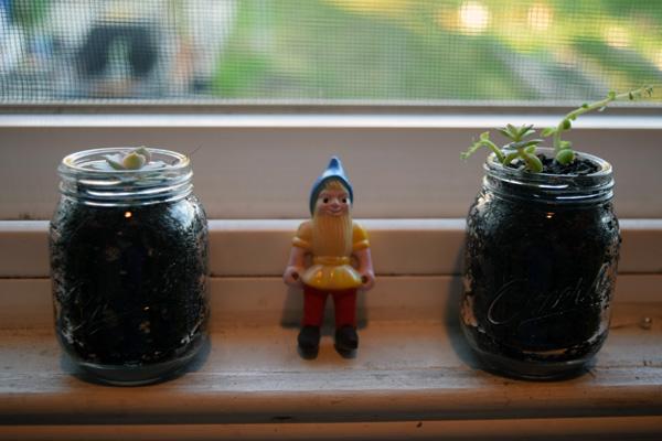 GardenGnome_Succulents_Lalalyssa